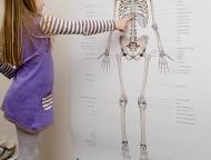 Child looking at skeleton poster