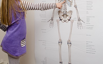 Child looking at skeleton poster