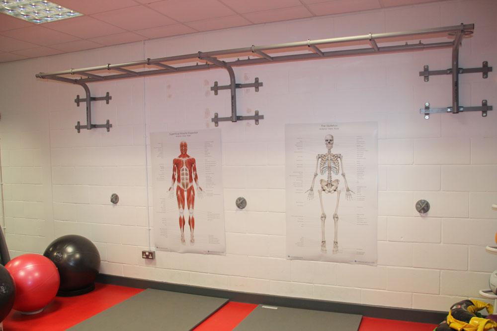Human Anatomy Charts Human Anatomy Posters Muscle Skeleton